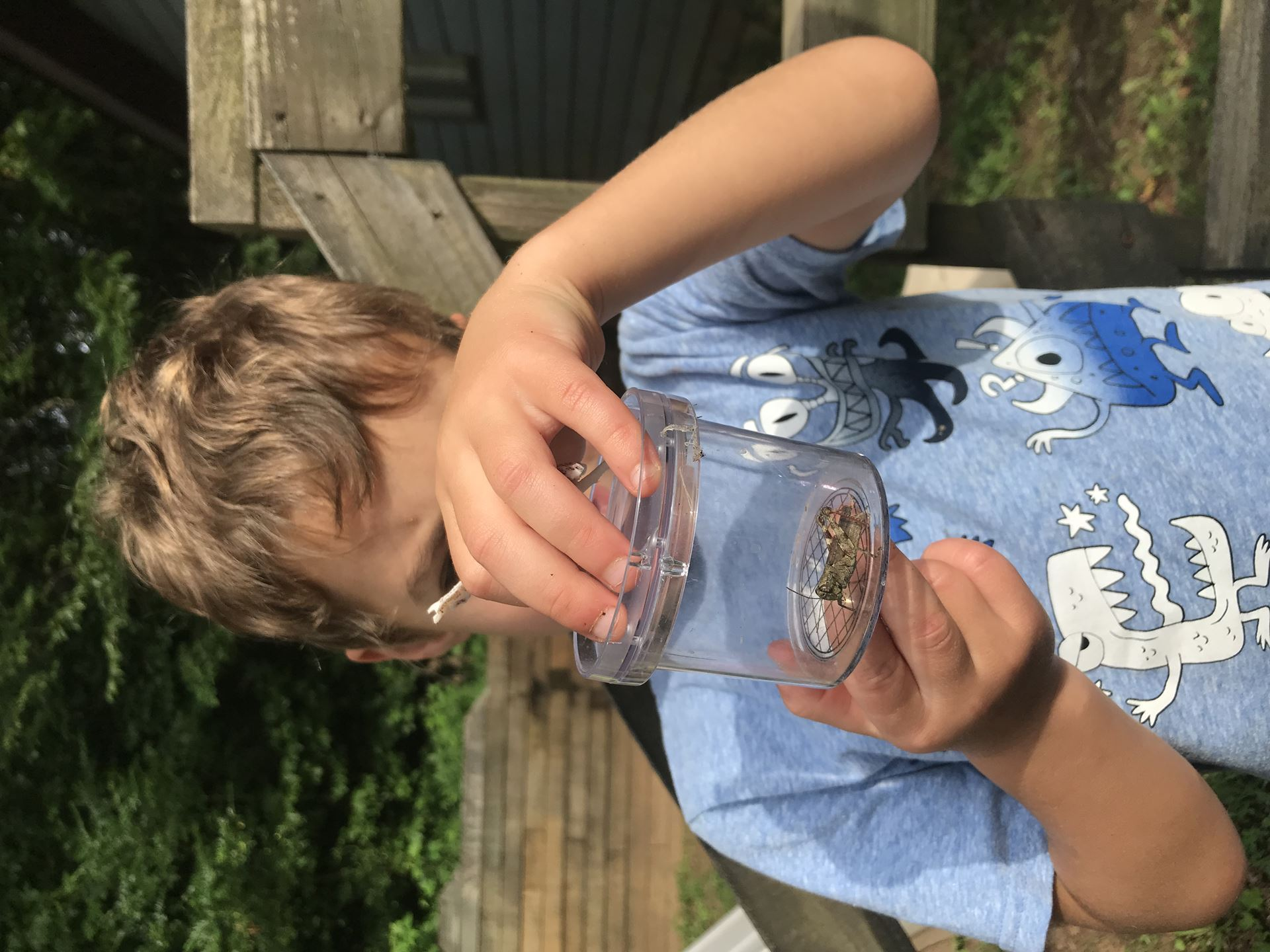 a boy in a blue shirt is looking at a cicada inside a clear insect jar